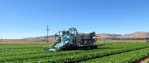Vin Rowe harvesting equipment is perfect for low growing crops